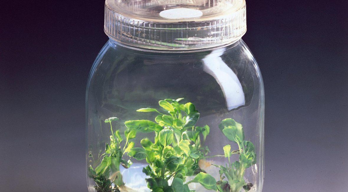 Plantes-couveuse
