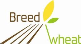 breadwheat