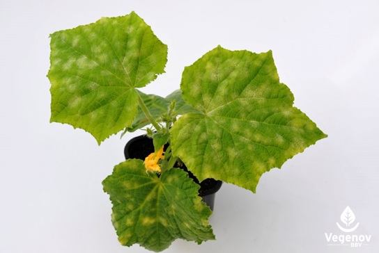 Bactéries, champignons, virus, parasites et plantes invasives… autant de sources de problèmes phytosanitaires émergents à surveiller.