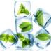 Du verre aux glaçons : un cocktail de solutions pour conserver des ressources génétiques