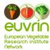 EUVRIN, une meilleure coordination de la R&D européenne sur les légumes