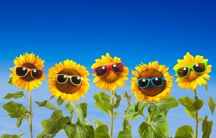 La qualité des plantes cultivées passe aussi par l'exposition à diverses radiations lumineuses